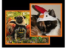 pet_costumes.png