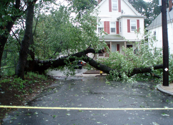 Circuit Street tree down